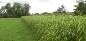 Our biomass experts provide services from crop cultivation to company finance